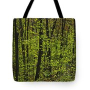 Forest In Spring Foliage, Six Mile Lake Tote Bag