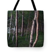 Forest, Shore Of Lake Superior Tote Bag
