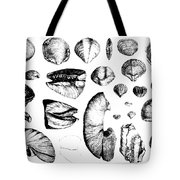 Fossilized Shells, 1844 Tote Bag