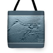Fossils - Pterosaurs Tote Bag