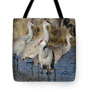Four Sandhill Cranes Tote Bag