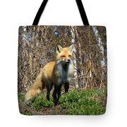 Fox And Birches Tote Bag