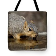 Fox Squirrel Tote Bag