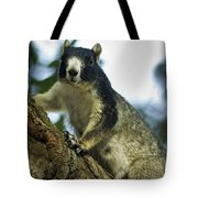 Fox Squirrel Tote Bag by Phill Doherty