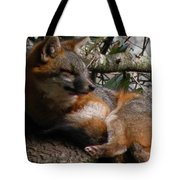 Foxy's Naptime Tote Bag