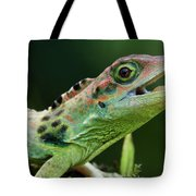 Frasers Anole Anolis Fraseri Male Tote Bag