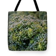 Fresh Broccoli Tote Bag by Susan Herber