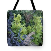 Fresh Young Redwoods On Mt Tamalpais Tote Bag