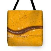 Freshwater Leech Hirudo Sp Tote Bag