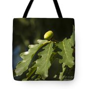From Little Acorns Tote Bag