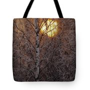 Frost-covered White Birch Trees Tote Bag