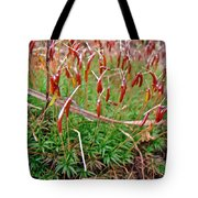 Fruiting Moss - Red And Green Tableau Tote Bag