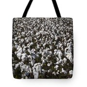 Full Frame Alabama Cotton Crop Tote Bag