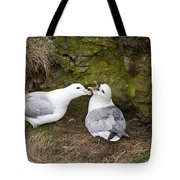 Fulmar Pair Bonding Tote Bag