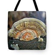 Fuzzy Turkey Tail Shelf Fungus - Trametes Ochracea Tote Bag
