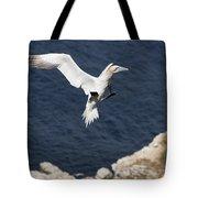 Gannet Landing Tote Bag