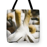 Gannets, Parc National De Tote Bag by Yves Marcoux
