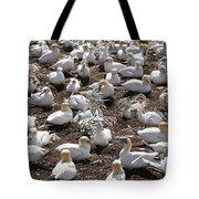 Gannets Showing Fencing Behavior Tote Bag