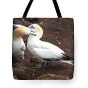 Gannets Showing Mutual Preening Behavior Tote Bag