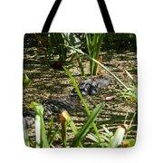 Gator Sunning Tote Bag