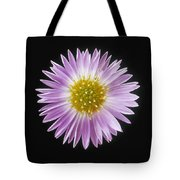 Gerber Daisy In Black Background Tote Bag
