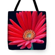 Gerbera Daisy 1 Tote Bag