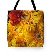Gerbera Daisy With Orange Petals Tote Bag