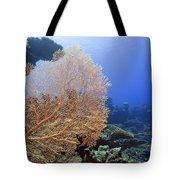 Giant Gorgonian Coral Tote Bag