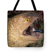 Giant Moray Eel And Cleaner Wrasse Tote Bag