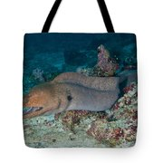 Giant Moray Eel Swimming Tote Bag by Mathieu Meur