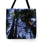Giant Redwoods, Muir Woods, California Tote Bag