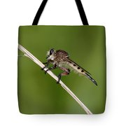 Giant Robber Fly - Promachus Hinei Tote Bag