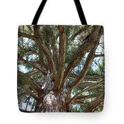 Giant Sequoias Tote Bag