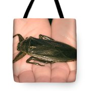 Giant Water Bug Tote Bag