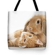 Ginger Kitten Lying With Sandy Lionhead Tote Bag