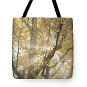 Ginkgo Tree With Sunlight Streaming Tote Bag