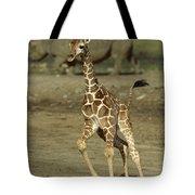 Giraffe Giraffa Camelopardalis Juvenile Tote Bag