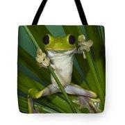 Gliding Leaf Frog Agalychnis Spurrelli Tote Bag
