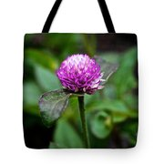 Globe Amaranth Bicolor Rose Tote Bag