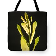 Glorious Willow Aglow Tote Bag