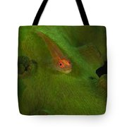 Goby On A Coral, Australia Tote Bag