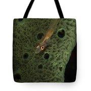 Goby On A Sponge, Fiji Tote Bag