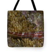 Goby On Coral, Australia Tote Bag
