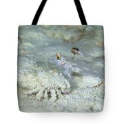 Goby With A Hermit Crab, Australia Tote Bag