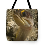 Gold-speck Jawfish Pouting, North Tote Bag