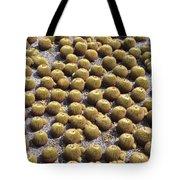 Golden Barrel Cactus 1 Tote Bag