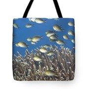 Golden Chromises Tote Bag