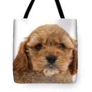 Golden Cockerpoo Puppy Tote Bag