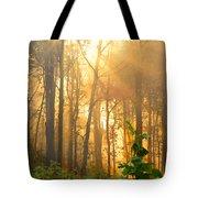 Golden Fog Thru The Trees Tote Bag