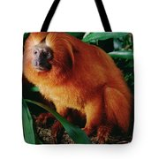Golden Lion Tamarin Leontopithecus Tote Bag